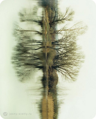 чудо-дерево фото